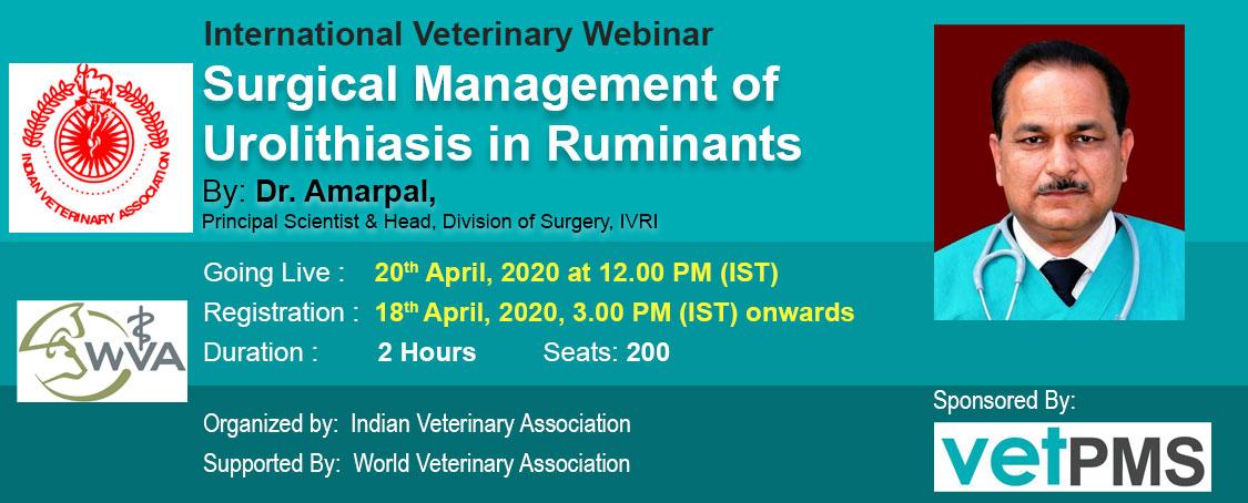 Surgical Management of Urolithiasis in Ruminants