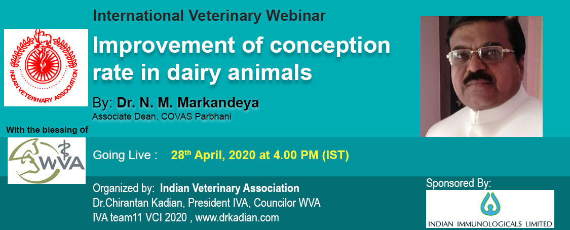 Improvement of conception rate in dairy animals