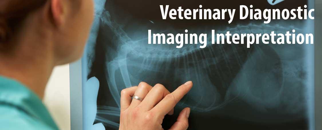 Discussoin on Diagnostic Imaging Interpretation